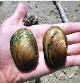 high school student success mussels
