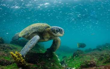 Exploring Biodiversity and Species Evolution in the Galápagos Islands