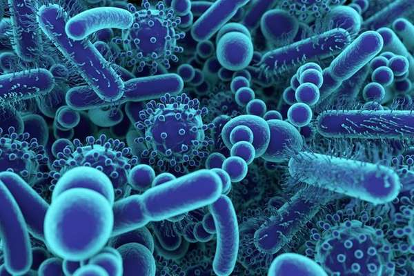 Analyzing the Role of the Human Gut Microbiota