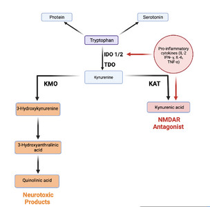 Review Paper On The Role of Stress-Induced Inflammation in Schizophrenia